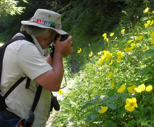 Ivan photographing Welsh poppies