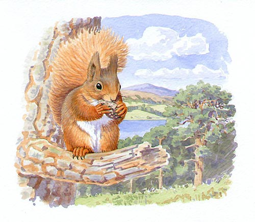 Red Squirrel by Artist Richard Allen