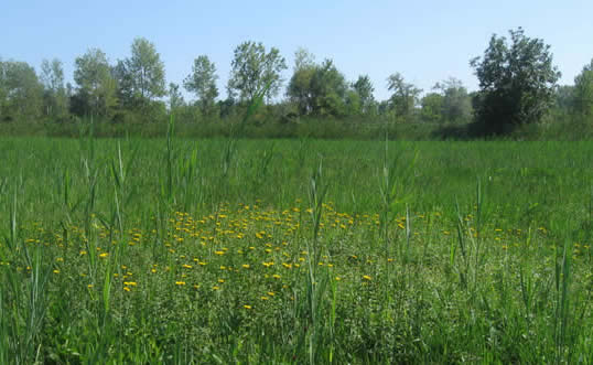 meadow in Gorizia
