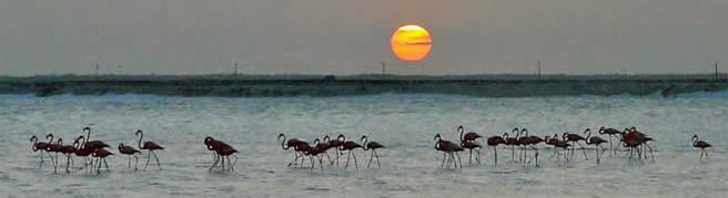 sunset with flamingos