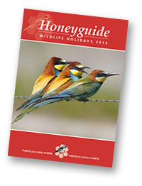 Honeyguide brochure 2013