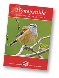 Honeyguide brochure 2014