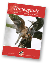 Honeyguide brochure 2015
