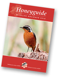Honeyguide brochure 2016
