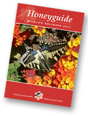 Honeyguide brochure 2017