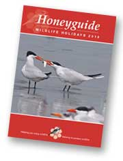 Honeyguide brochure 2018