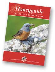 Honeyguide brochure
