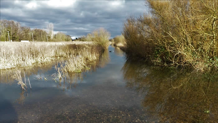 Flooded path through the marshes, 1 Feb 2021