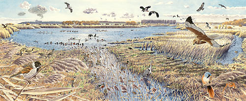 Minsmere from Island Mere hide by Richard Allen